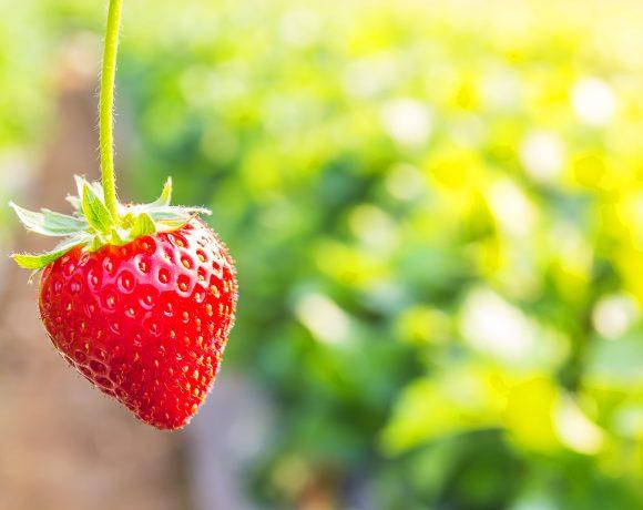 fruta-fresa-de-temporada-come-limpio-carla-zaplana